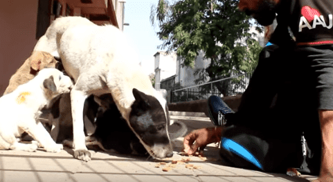 Chiot de sauvetage | Photo: YouTube / Animal Aid Unlimited, Inde