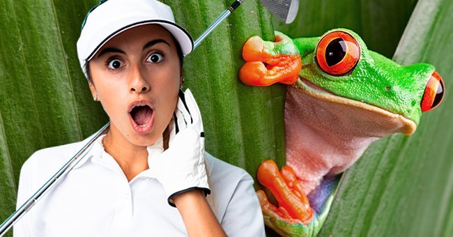 Daily Joke: Talking Frog Grants Three Wishes to a Woman Who Freed It