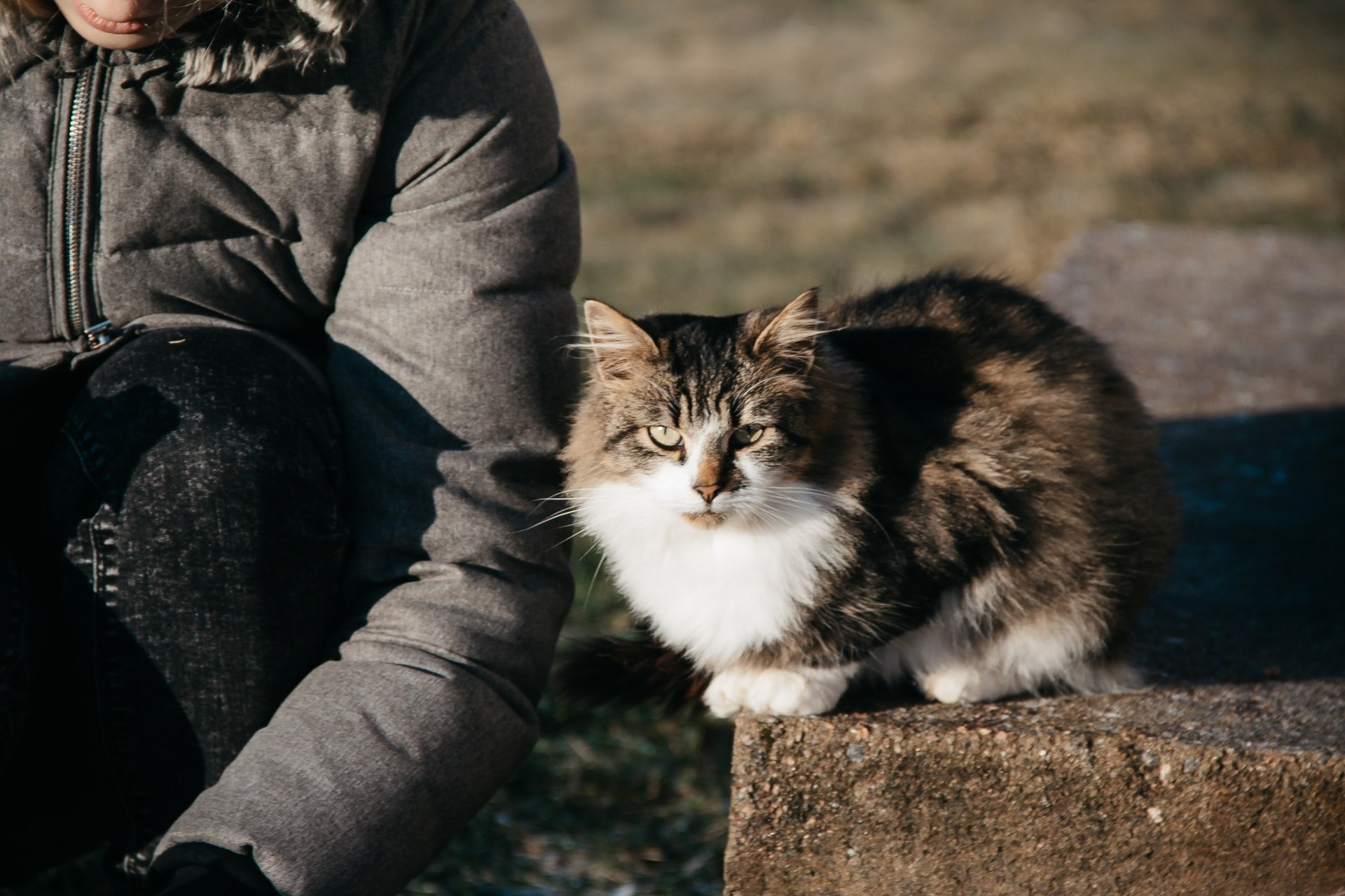 Person sitting outside with cat by their side | Photo: Pexels/NastyaSensei