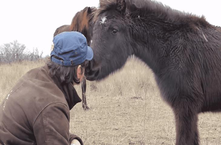 QUATRE PAWS héros : Comment un cheval sauvage remercie son sauveur | FOUR PAWS International : Youtube