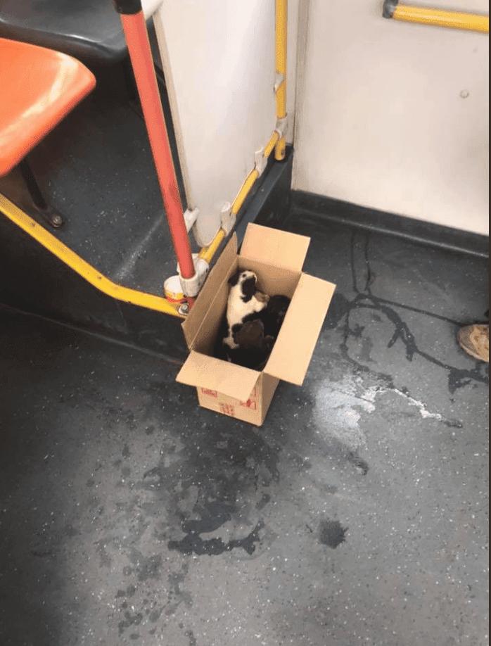 La caja de cachorritos. Fuente: Facebook/ksadjkashfasd