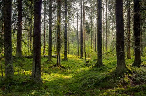 Photo of a densely wooded area.   Photo: Shutterstock