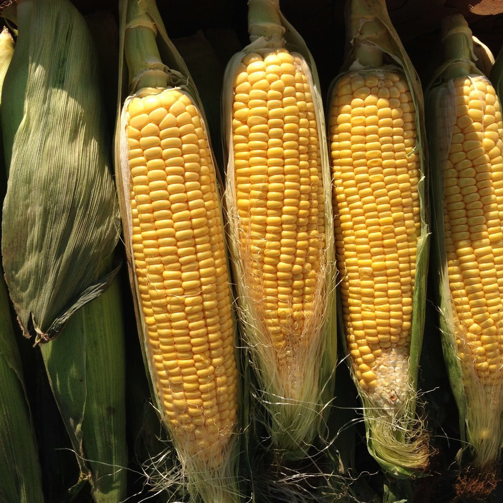 A picture of four ears of corn. | Photo: Shutterstock