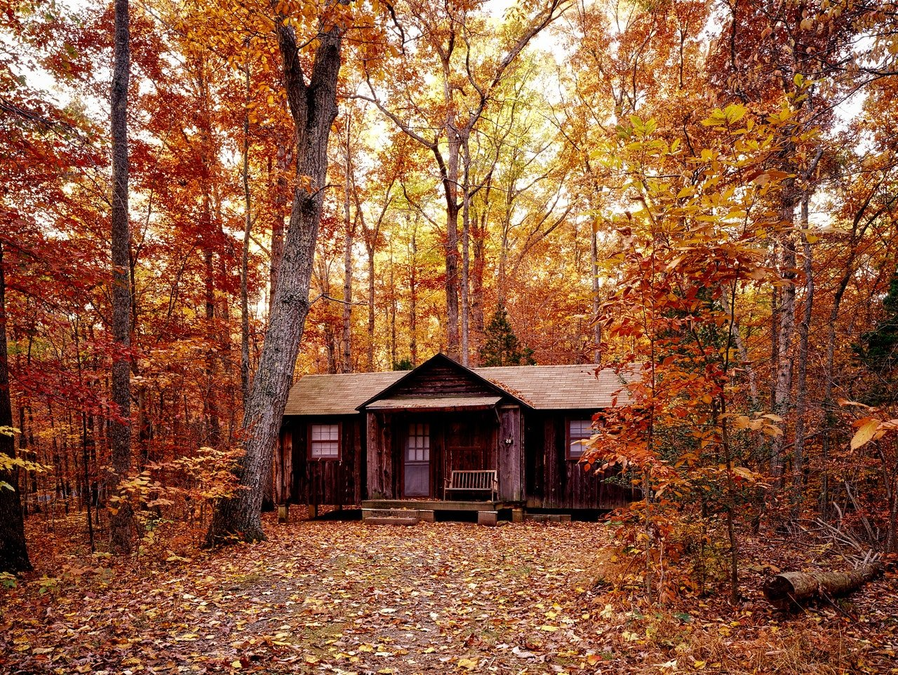 Photo of a wooden cabin located in the woods | Photo: Pexels