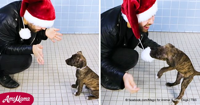 Magician brings into play a show for shelter dogs and they madly express their love to that