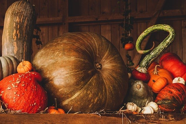 A group of various pumpkins rest in a barn-like room | Photo: Pixabay
