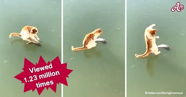 Cat's clumsy attempts to get dead fish from under frozen lake goes viral