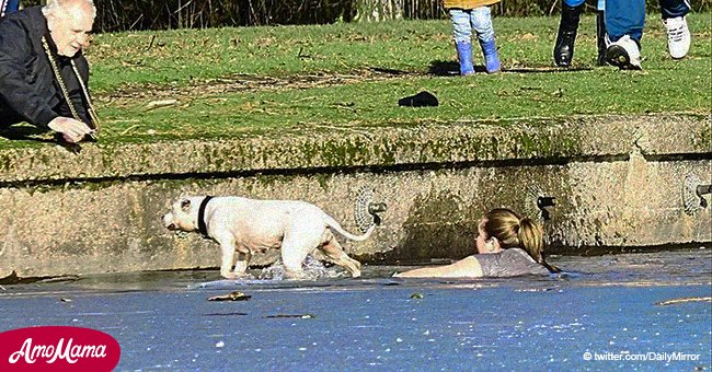 Woman amazed bystanders by leaping into icy waters and rescuing a dog