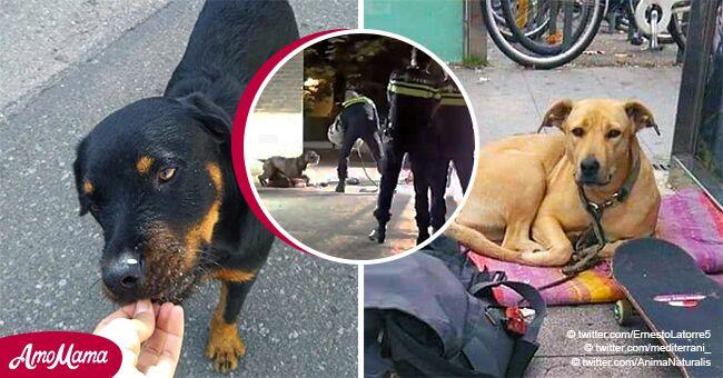 Polémico video muestra que la policía no tenía que disparar a los perros Sota y Shaitan