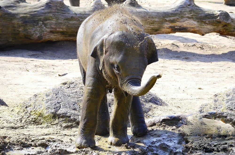 Elefante bebé.| Imagen: PxHere