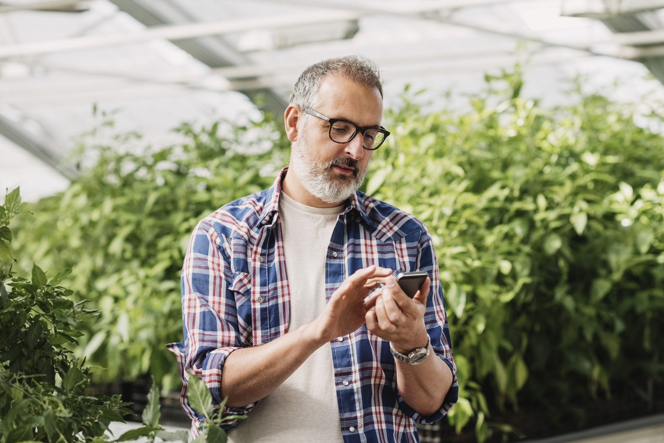Mature man using mobile phone in greenhouse | Photo: Getty Images