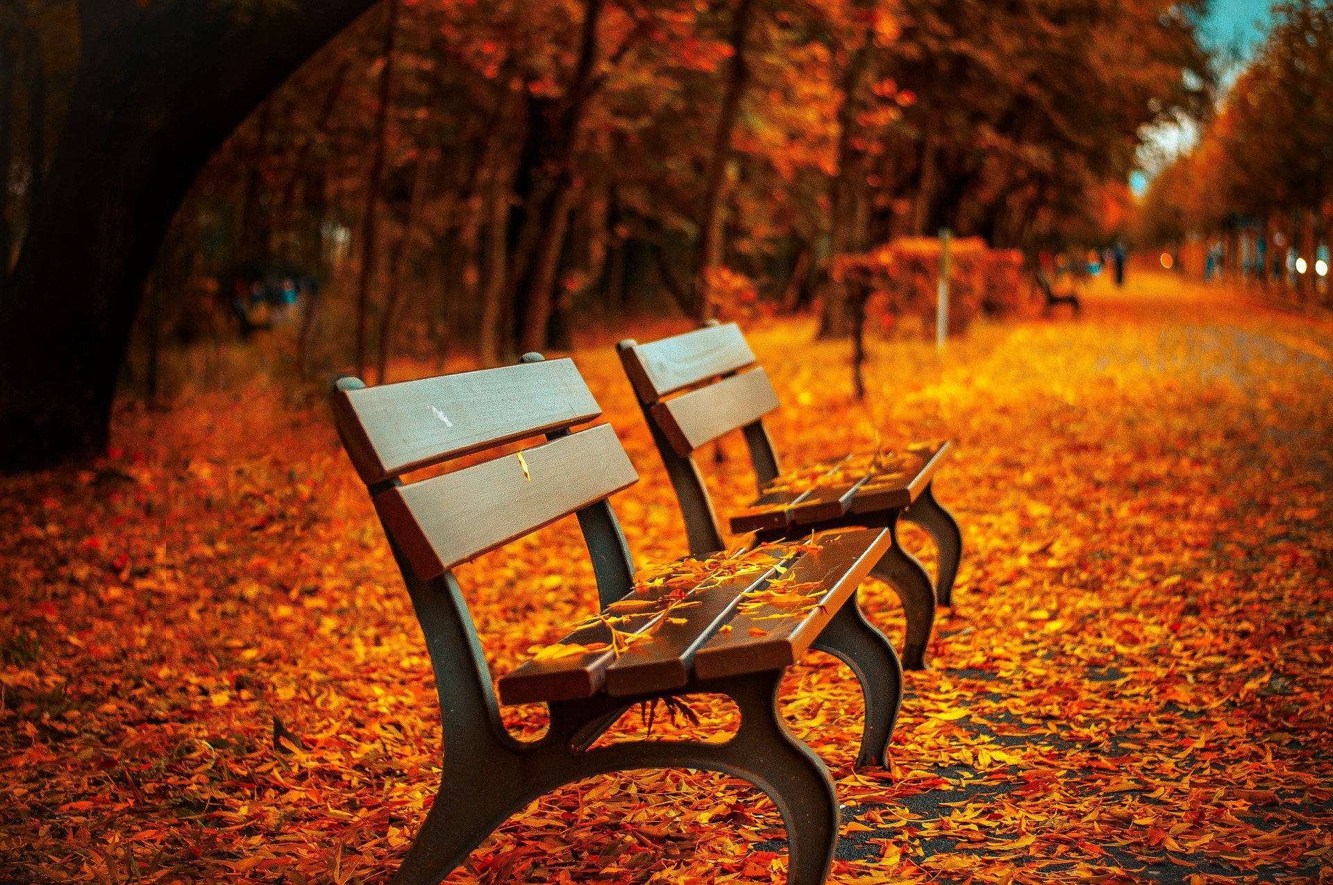 A picture of benches at a park during the Autumn season | Source: Pixabay