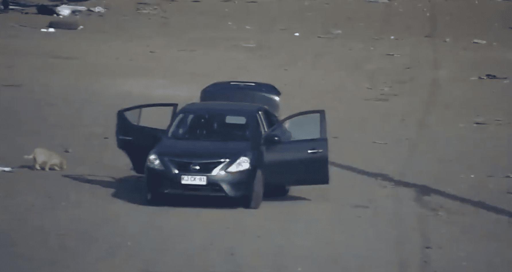 Dejaron bajar al animal del auto antes de irse. Fuente: Twitter/MuniLaPintana