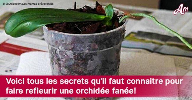 Astuces pour une nouvelle floraison d'orchidée fanée