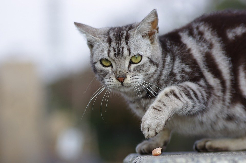 A cat standing and watching on a fence| Photo: Pixabay