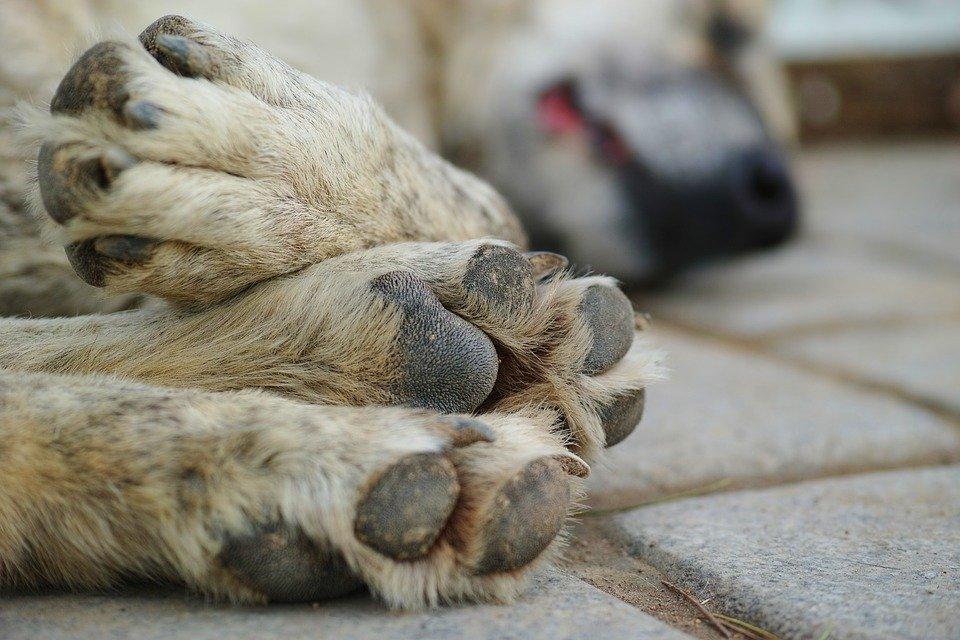 Les pattes d'un chien dans la rue │Image : Pixabay