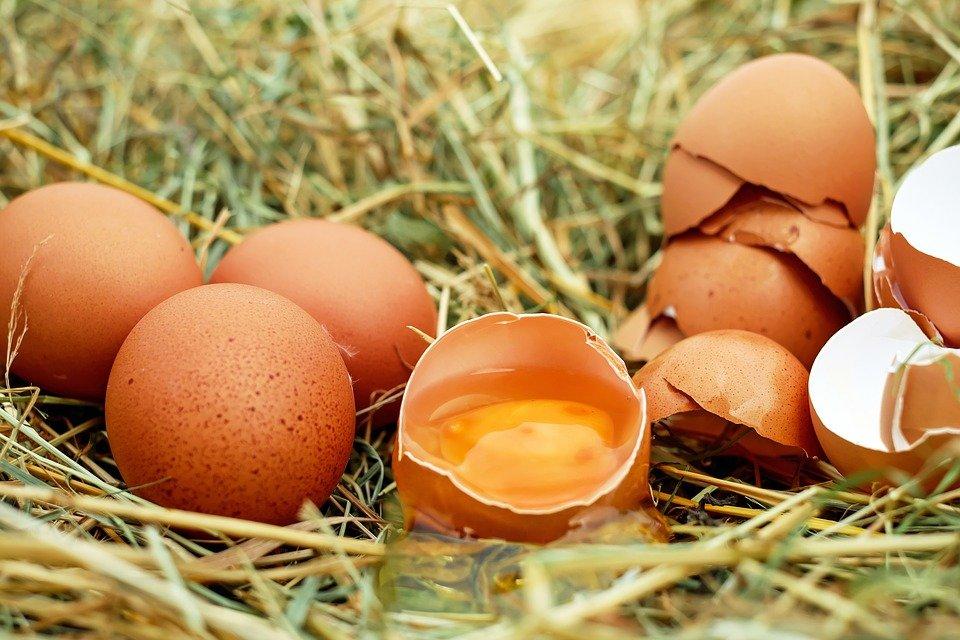 Cáscara de huevo.   Imagen tomada de: Pixabay