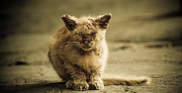 Gatito desamparado. | Foto: Flickr