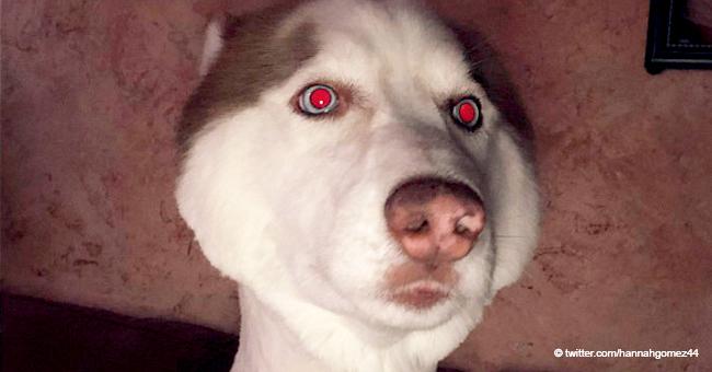 """Une jeune femme demande à des toiletteurs une petite coupe pour son husky mais """"ils ont pris la partie du rasage de manière littérale"""""""
