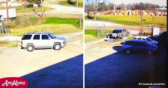 Desgarrador video muestra a un perro persiguiendo al auto de su dueño luego de ser abandonado