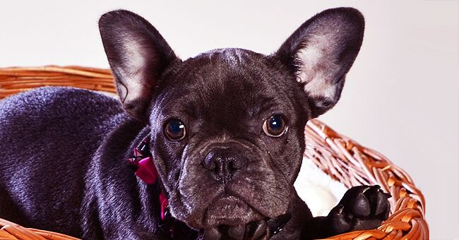 Ecosse : un chien meurt 15 minutes après son maître qui a perdu sa bataille contre le cancer
