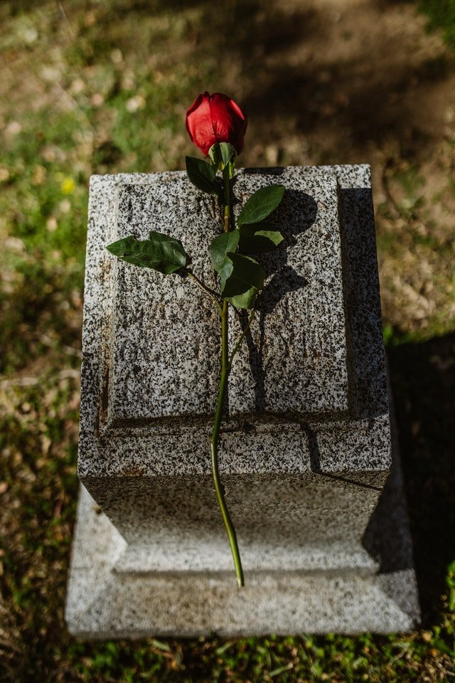 Photo of a rose on a gravestone | Photo: Pexels