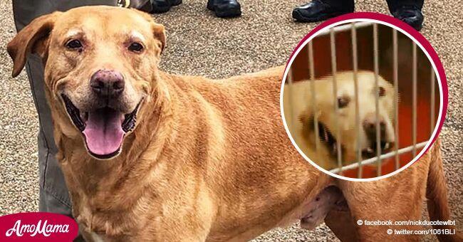Perro policía es abandonado cruelmente tras 9 años de leal servicio