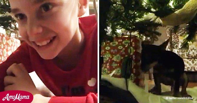 Un garçon tente de surprendre le père Noël en vidéo, mais son chien lui fait une surprise hilarante (Vidéo)
