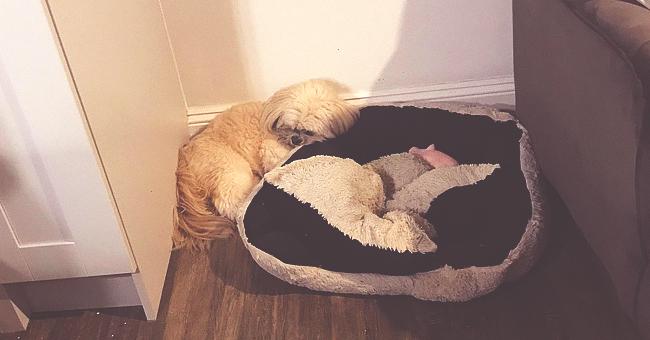 Un chien laisse une place dans son panier pour son meilleur ami décédé il y a un an