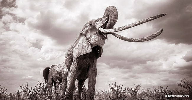 Incredible Photos of the Rare 'Elephant Queen' Were Taken Shortly before She Died