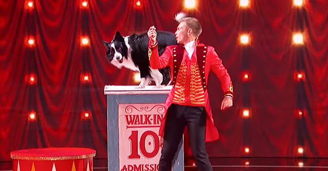 AGT Releases First 10 Minutes of 'Judge Cuts' with Adorable Performance by an Australian Shepherd
