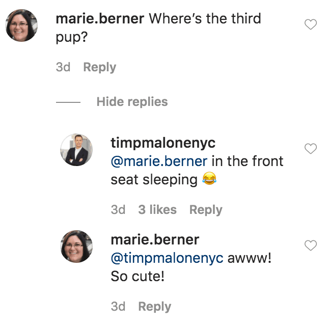 A fan commented on a photo of Don Lemon and Tim Malone sitting in a convertible car with their dogs, Barkley and Boomer | Source: Instagram.com/timpmalonenyc