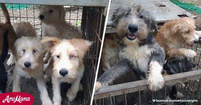 Indignación tras grupo de defensa animal ser acusado de matar en secreto más de 230 perros