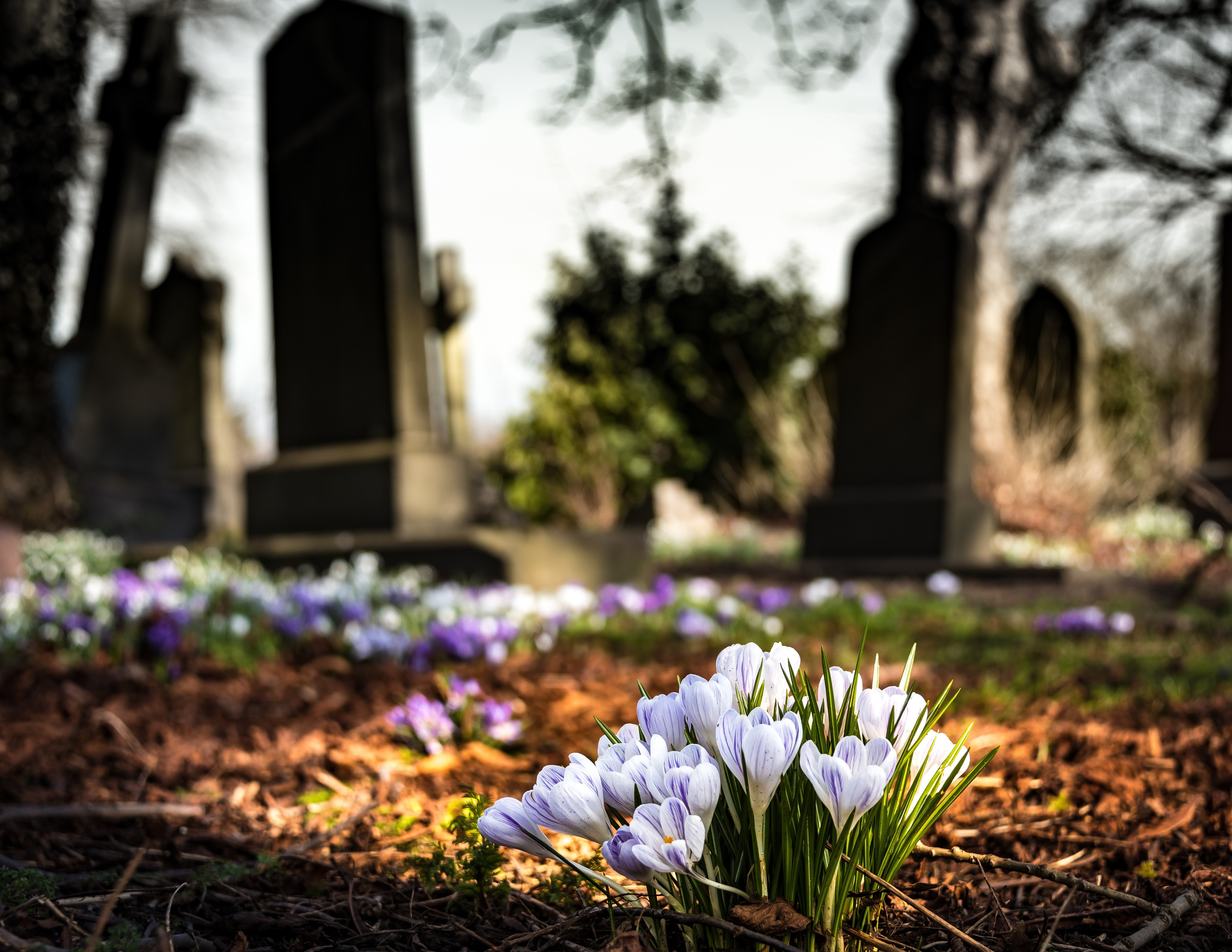 A close-up of flowers growing in a cemetery. | Photo: Pexels.