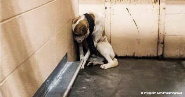 Verlassener Hund, der im Wald ausgesetzt wurde und zu verängstigt war, um um Trost zu bitten