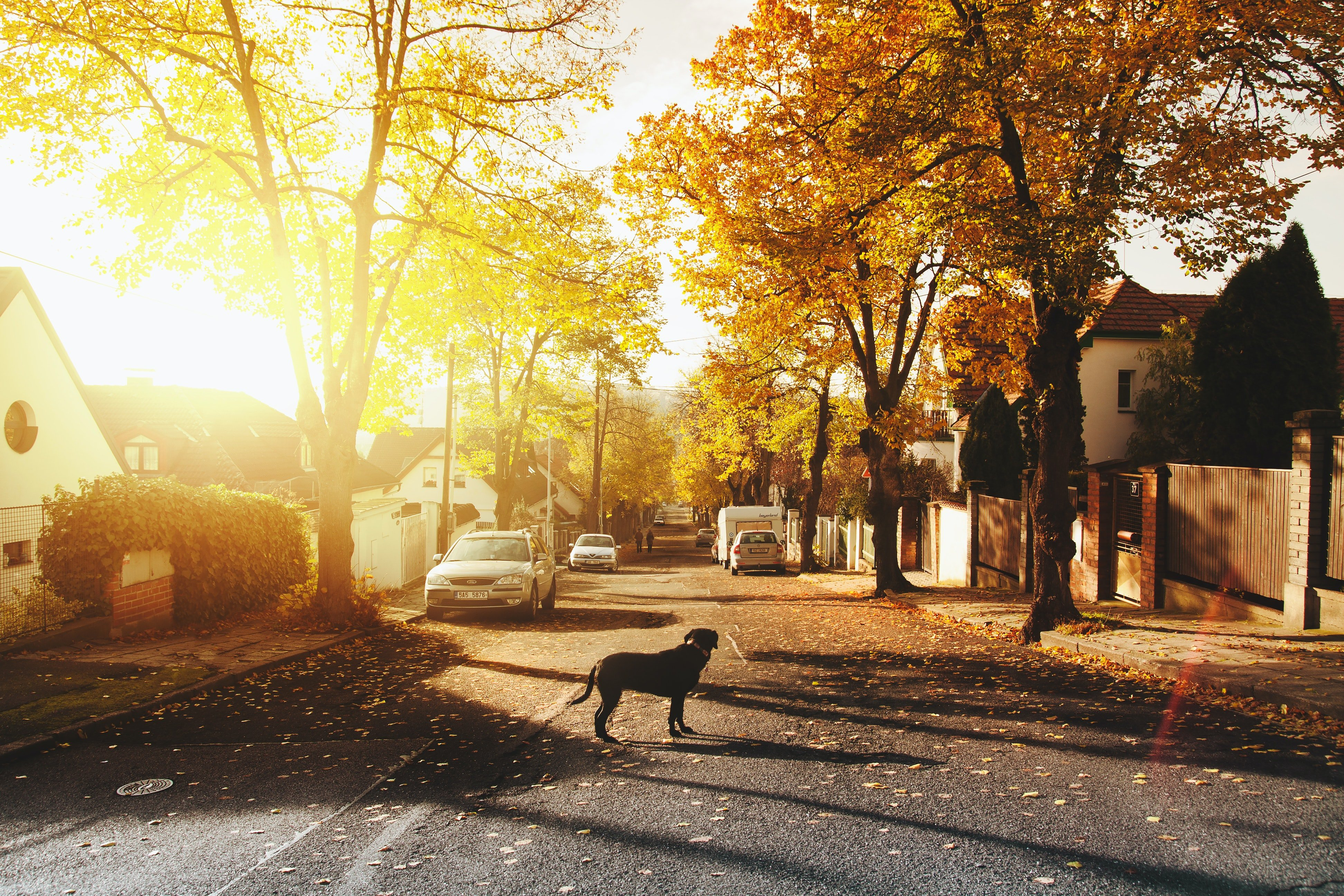 A dog in the middle of a street | Photo: Pexels