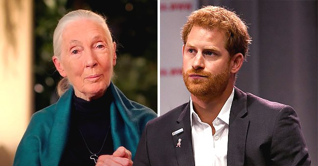 Prince Harry Reportedly Finds New Life a Bit Challenging According to His Friend Jane Goodall
