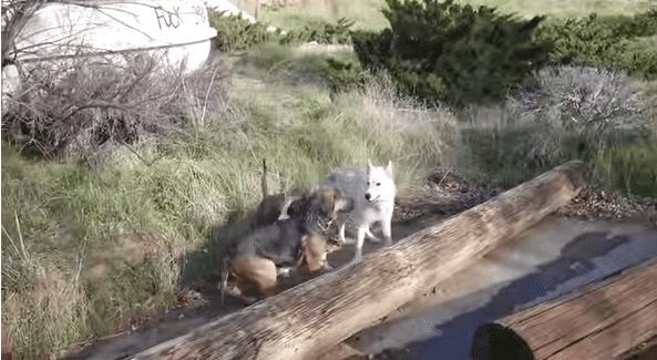 Los tres perritos felices de estar juntos.| Imagen: YouTube /Trevor Costelloe