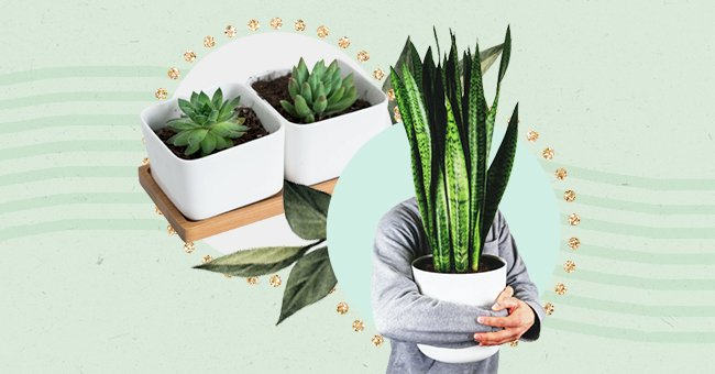 10 Faux Plants For Lazy People