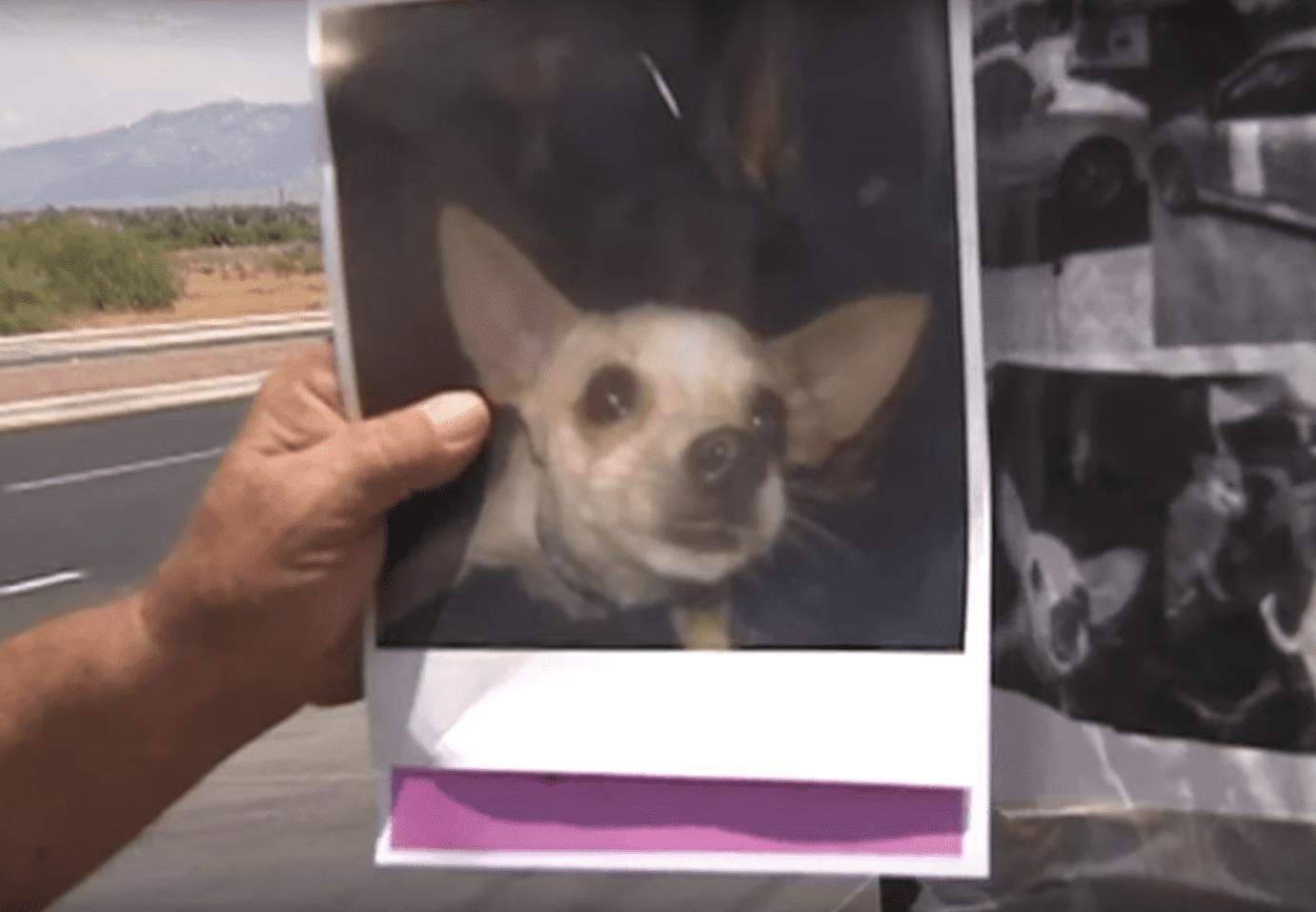 Eddie Collins de Tucson tenant une photo de son chien Jenny. Source: YouTube | News 4 Tucson KVOA-TV