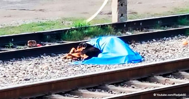 Loyal Dog Refuses to Leave His Dead Owner after He Was Hit by a Train