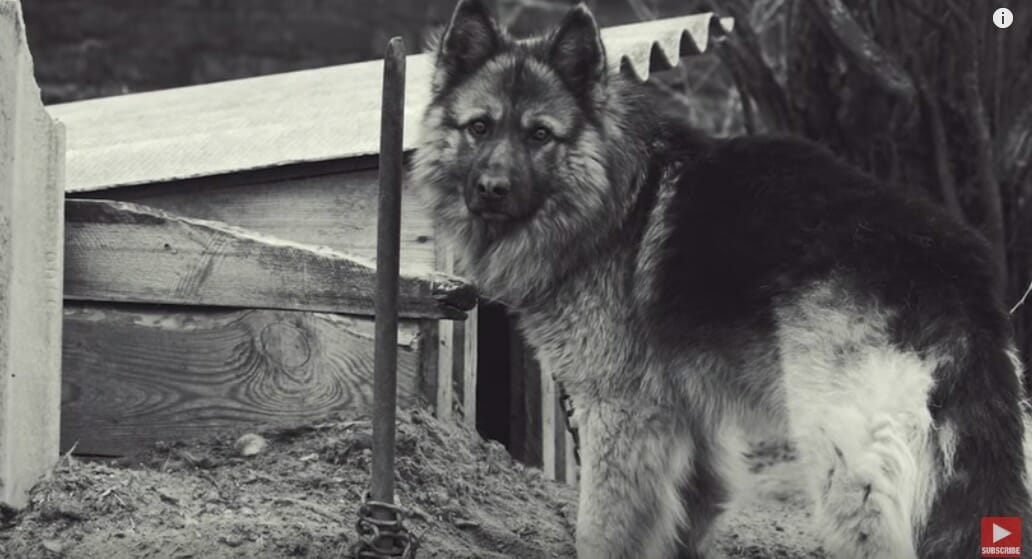 Herschel, shortly after he was rescued. Image credit: YouTube/Rocky Kanaka