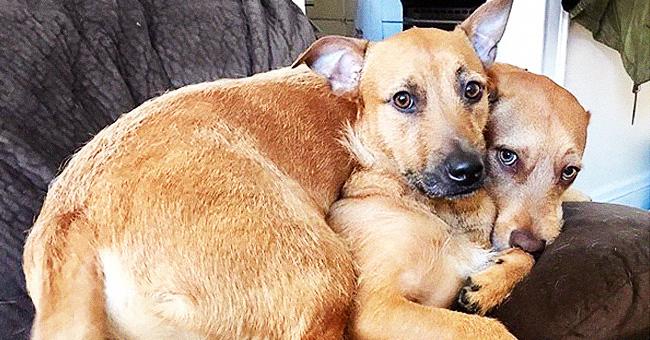 """Un chien trouve son """"frère jumeau"""". Ses propriétaires l'adoptent"""