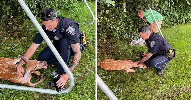 A police officer can be seen offering an injured deer some affection and a drink of water | Photo: Facebook/Foxborough Police Department