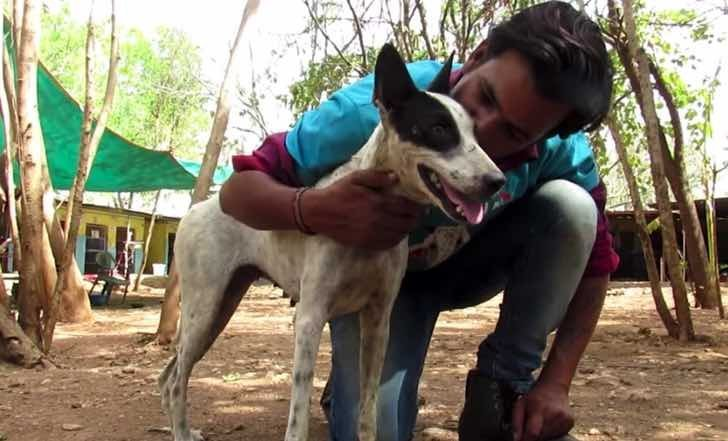 Quelle: Youtube/ Animal Aid Unlimited, India