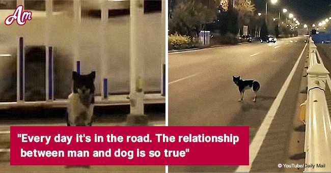 Faithful dog waited on a busy road where his owner died in August