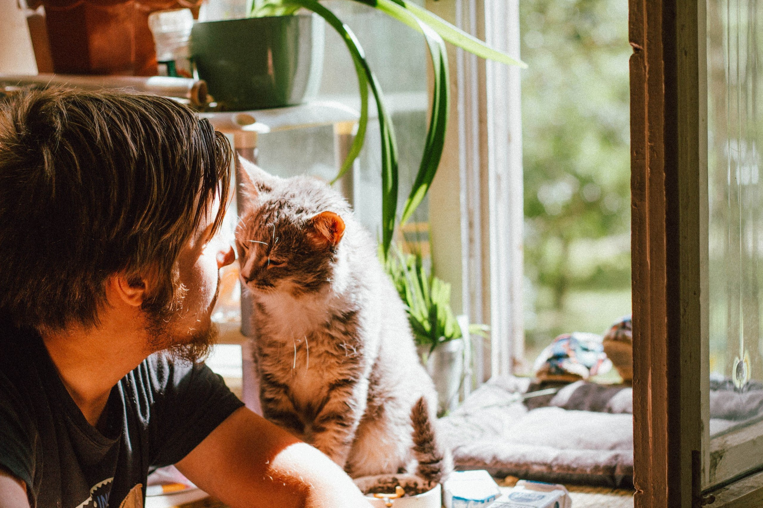 A cat brushes up against its male owner's nose | Photo: Pexels/Yuliya kota