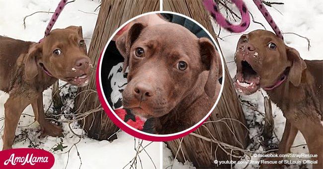 Ein verzweifelter Hund, der in Schnee verlassen wurde, bittet um Hilfe