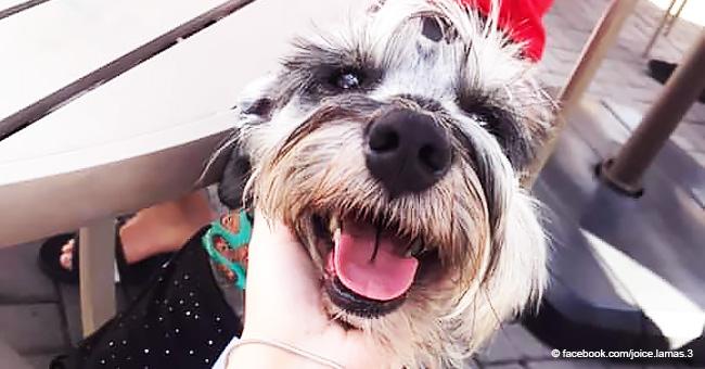 Ce chien adopté après un passé de souffrance et de faim laisse toujours la moitié de sa nourriture dans le bol