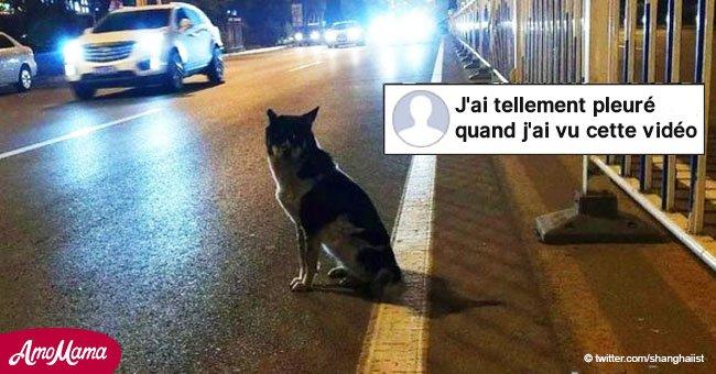 Le chien en deuil attend plus de 80 jours à l'endroit exact où son propriétaire a été tué
